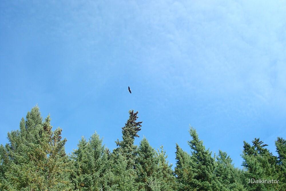 soar like an eagle by JDalkinator
