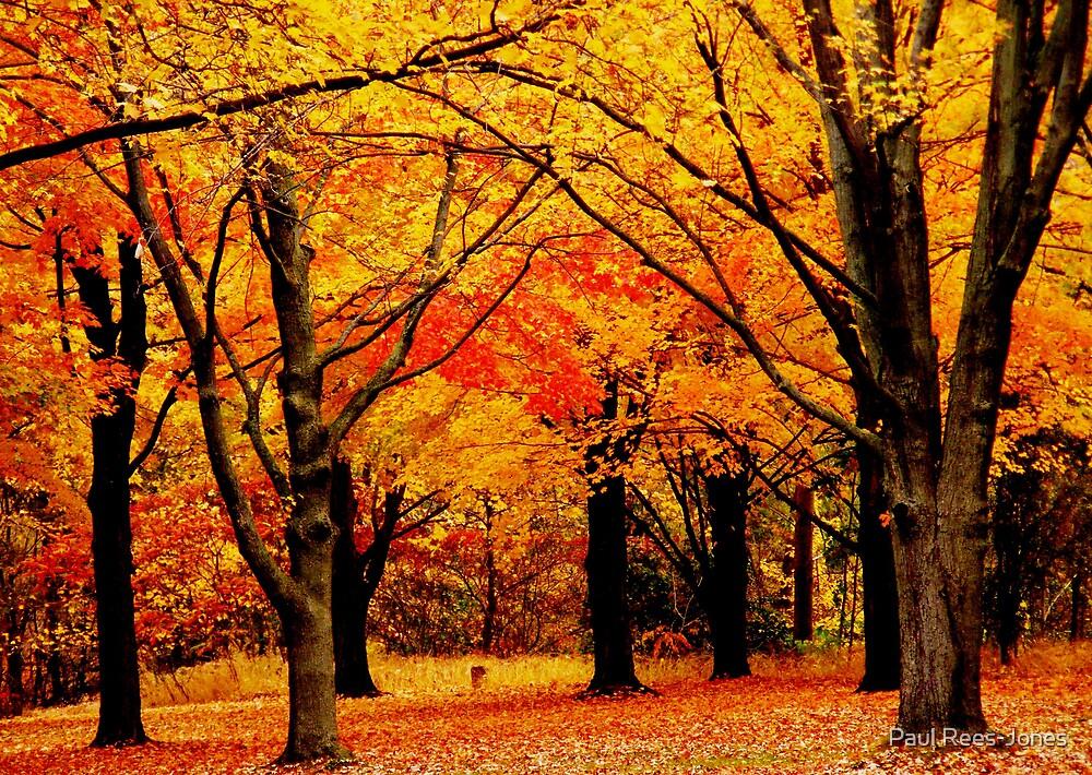Magic in the Wood. by Paul Rees-Jones