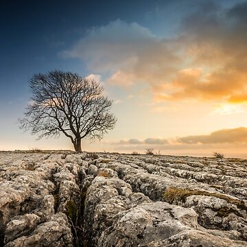 Malham Rakes - the Tree by ademcfade