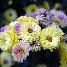 flowers, San Diego, CA by rmenaker