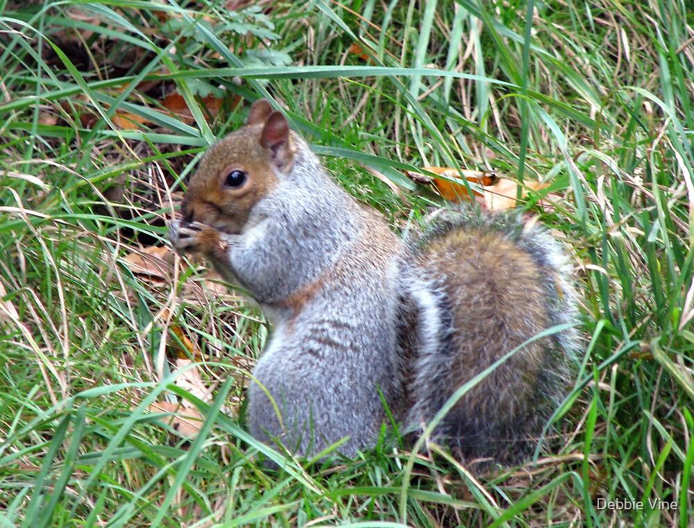 Squirrel Nutkin by Debbie Vine