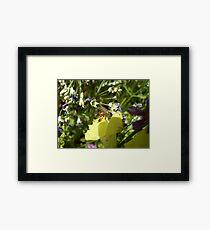 pollen hunt Framed Print
