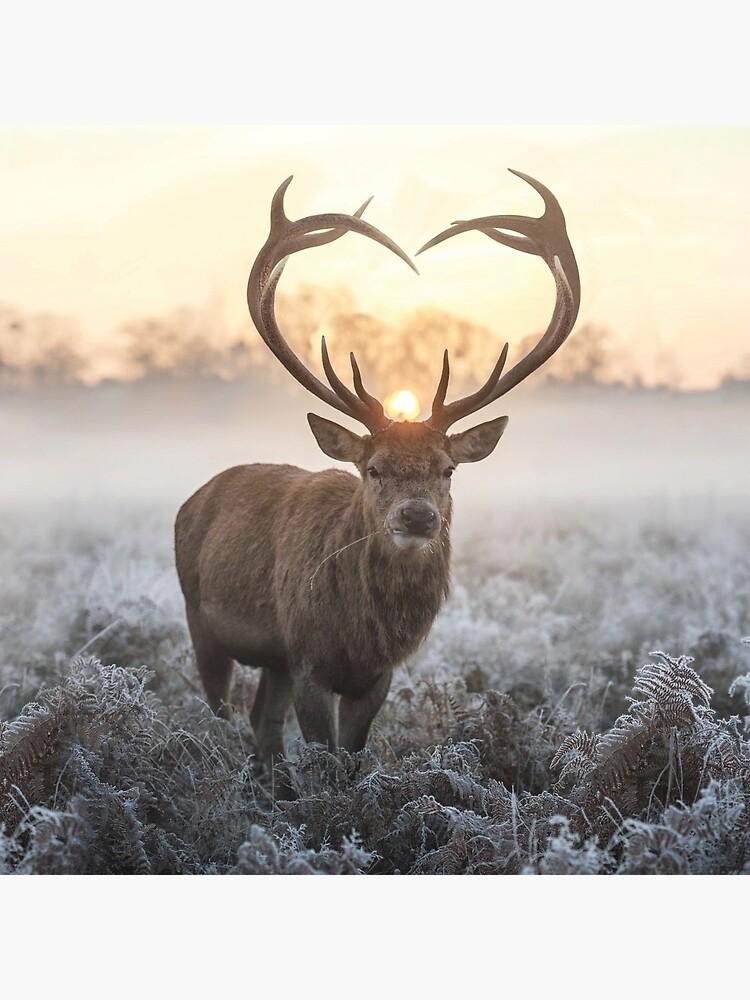 Christmas Love Stag heart shaped antlers by Junkyardmax