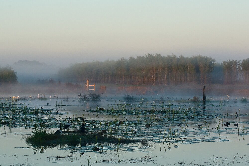 Misty morning at Knuckey Lagoon by Keith McGuinness