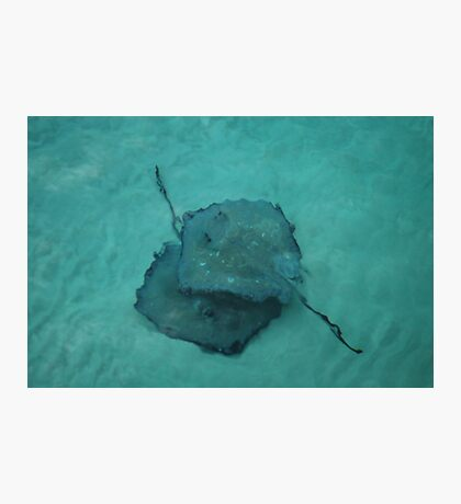 Stingrays Photographic Print