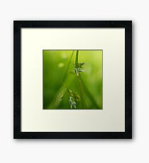 Dewy Grass | Macro Photography Close-up Framed Print