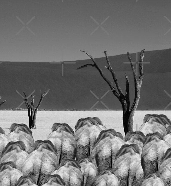 A Herd of Elephants by CarolM