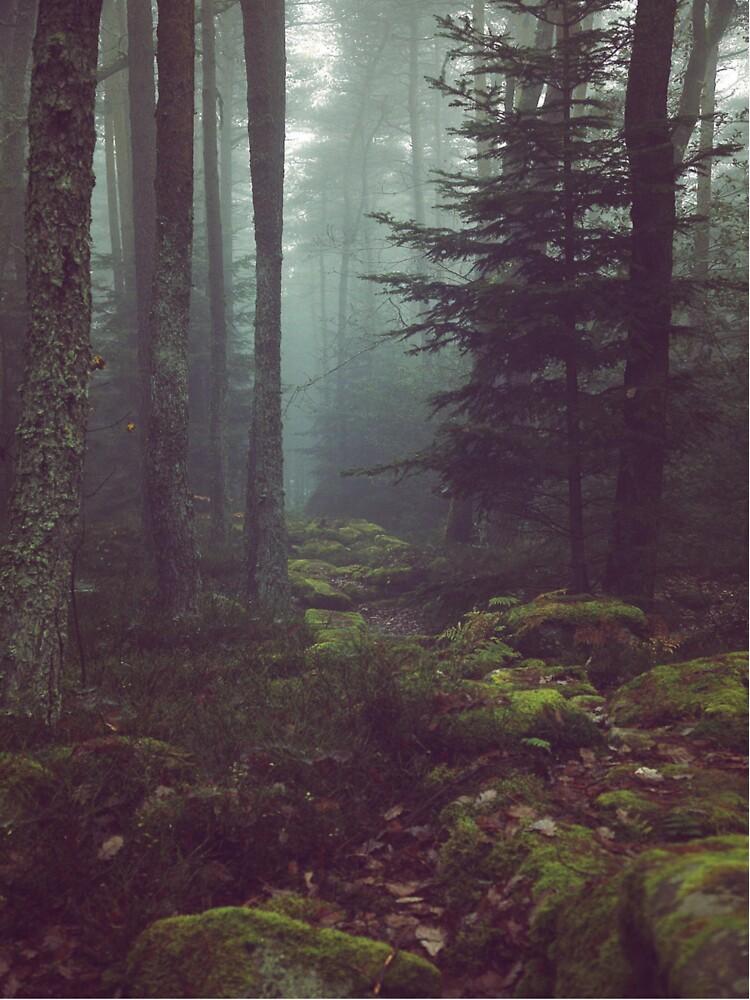 Waldnacht von stockholm