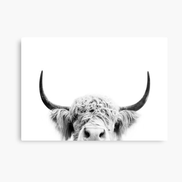 Peeking Cow Metal Print