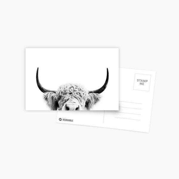 Peeking Cow Postcard
