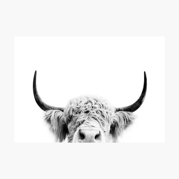 Peeking Cow Photographic Print