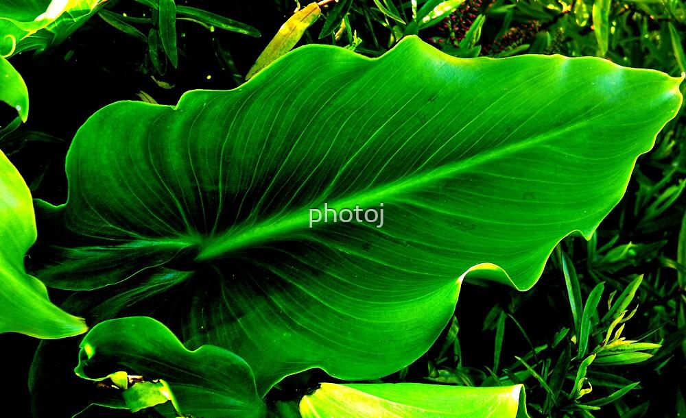 photoj Flora-Leaf by photoj