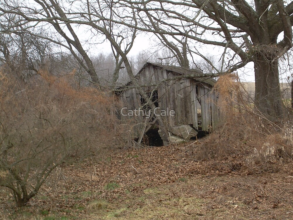 Old Shack by Cathy Cale