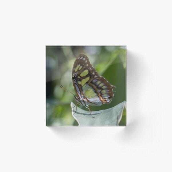 Malachite butterfly Acrylic Block
