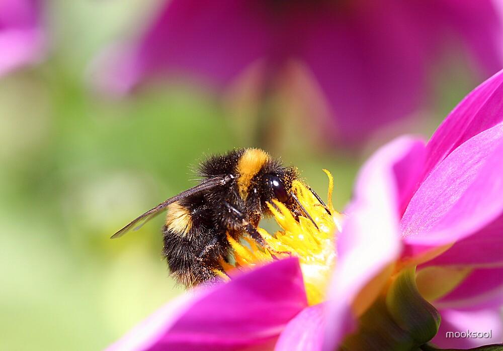 Bumblebee lunch by mooksool