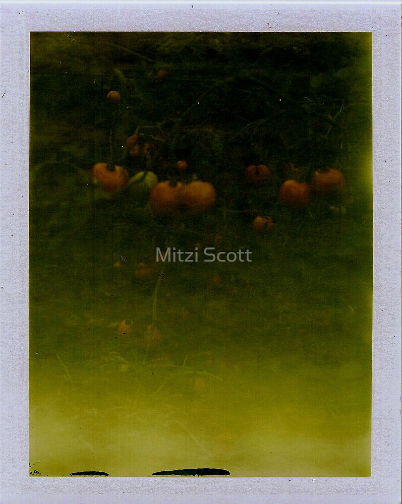 Fried Green Tomatoes by Mitzi Scott