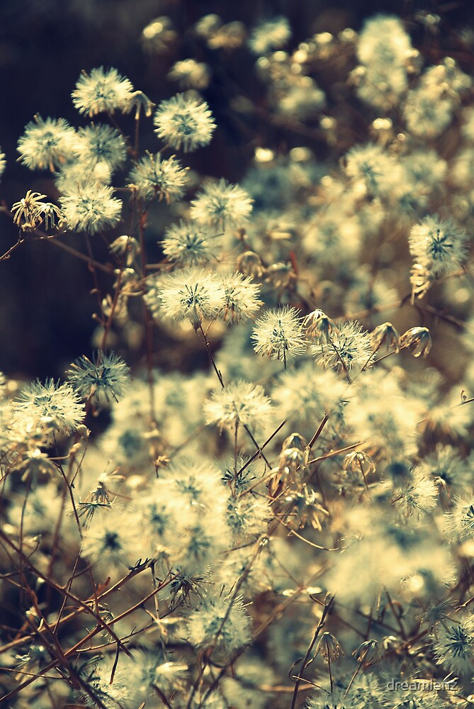 Fluff by dreamlenz