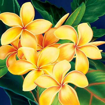 Tropical Paradise Hawaiian Plumeria Illustration by DriveIndustries