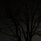 Night Silouette  by Alex Evans