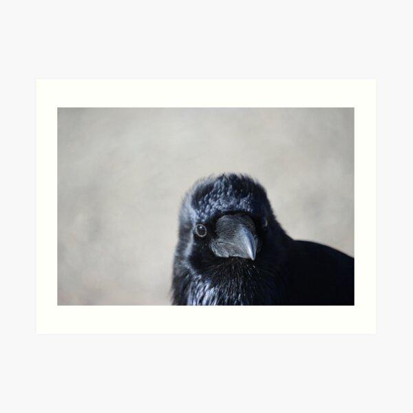 Raven chick Art Print