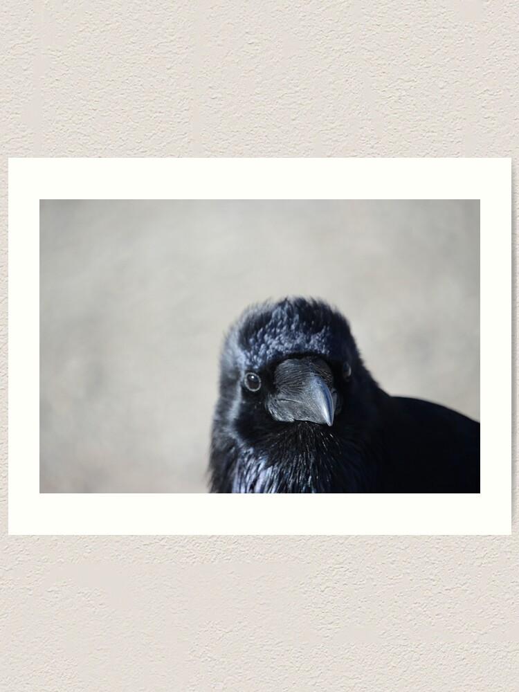 Alternate view of Raven chick Art Print