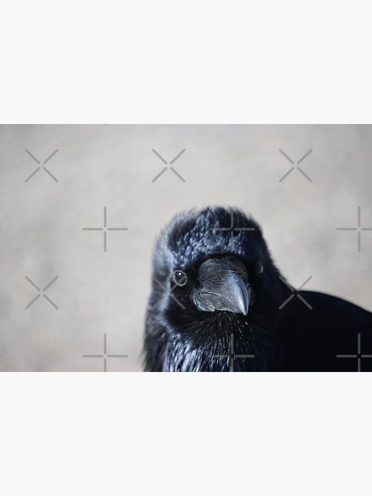 Raven chick by debfaraday