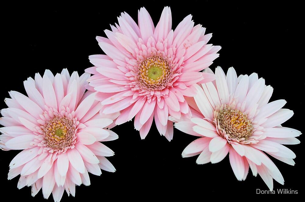Pink Trio by Donna Wilkins