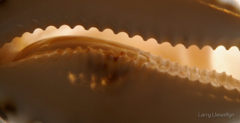 This is the edge of the Cowery Shell... Solved.. by Larry Llewellyn