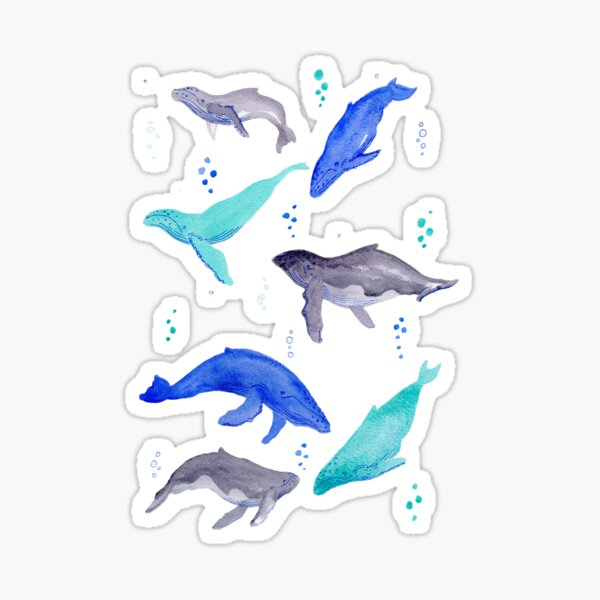 A whale of a time- diving humpback whales Sticker