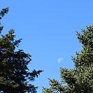 Summer Moon by MMCFraser