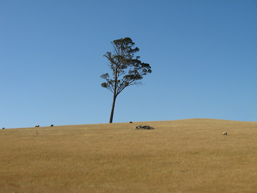 A lonely tree. by Damian Bourke