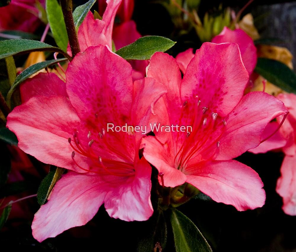 Flowers by Rodney Wratten