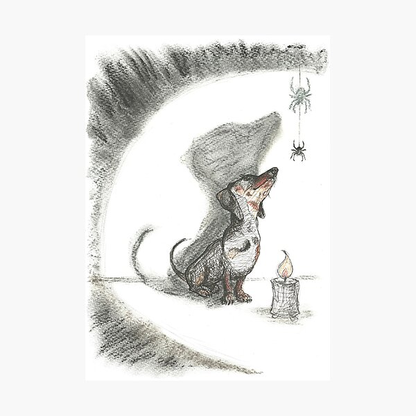 Dachshund and spider. Spooky sausage dog, doxie shadow, illustration. Photographic Print