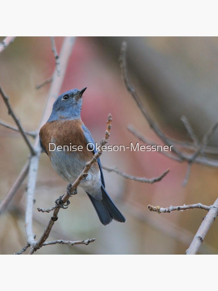 Western Bluebird 2 by DeeMess