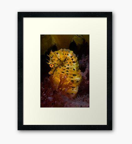 Life under the Portsea Pier  Framed Print