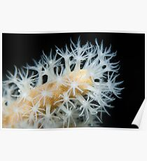 Feeding coral Poster