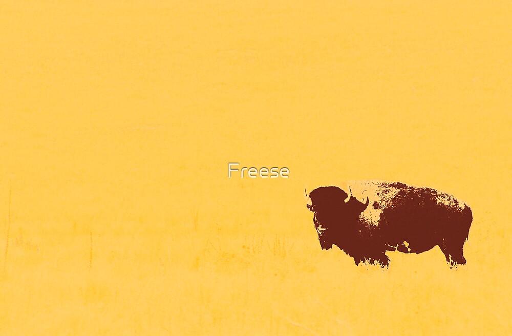 Buffalo by Freese