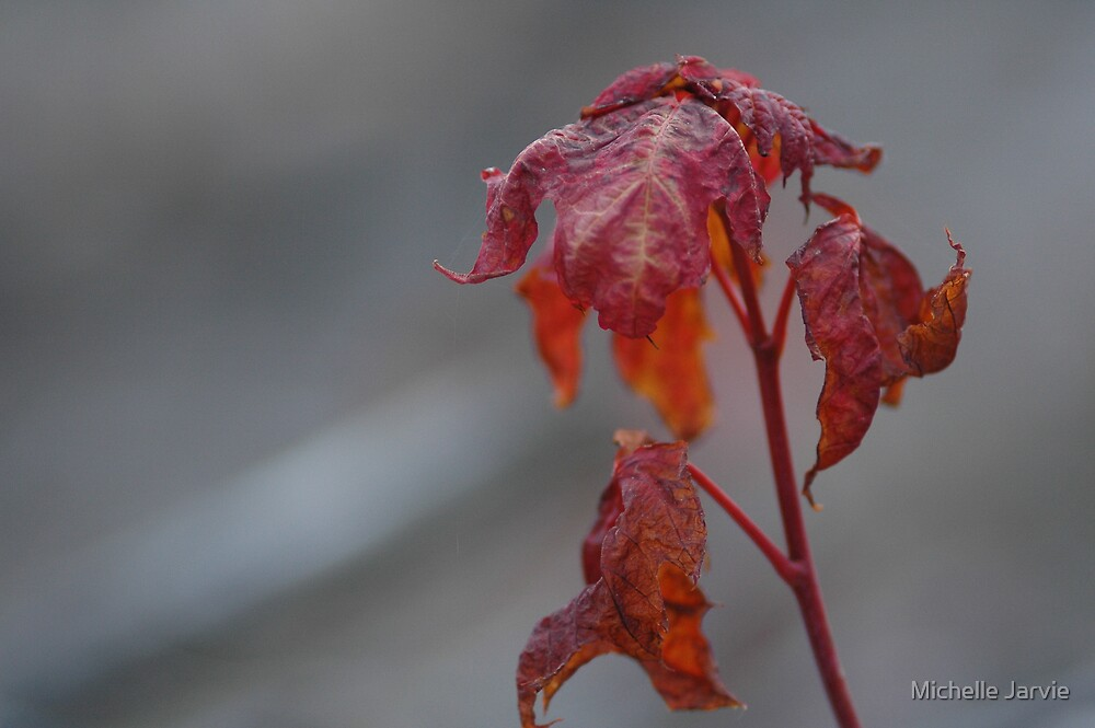 Maple Sprout by Michelle Jarvie