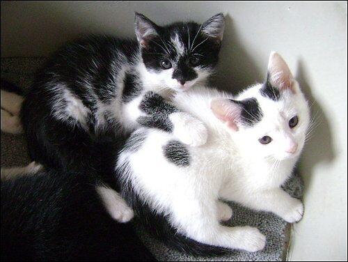 Kittens by LucyAnnx
