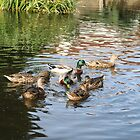 More Ducks by kalaryder