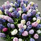 Assorted hyacinths by bubblehex08