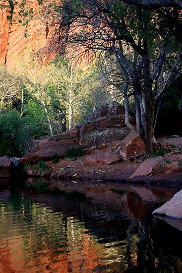 Arizona Reflections by Varinia   - Globalphotos