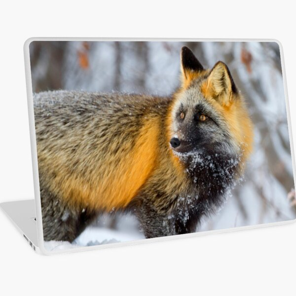 Cross Fox in the Arctic Laptop Skin