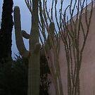 cacti by Sheila McCrea