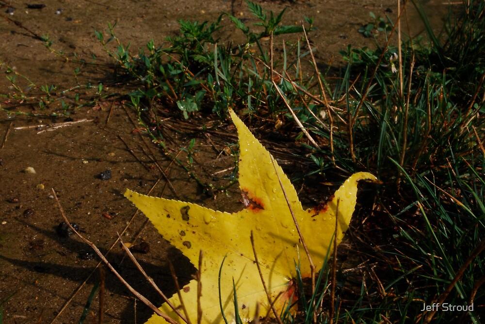 leaf star by Jeff stroud
