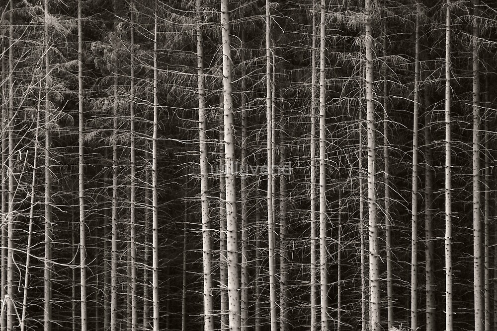 Forest by Willy Vendeville
