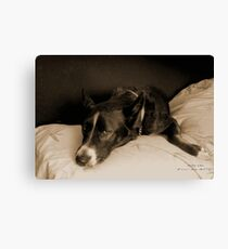 "Missy Girl: ""Get off that bed!"" Canvas Print"