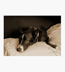 """Missy Girl: """"Get off that bed!"""" Photographic Print"""