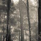 Barrington Mist by Mel Brackstone