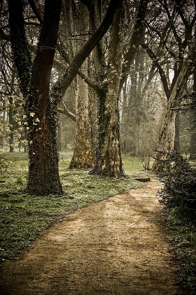 The path by Csaba Jekkel